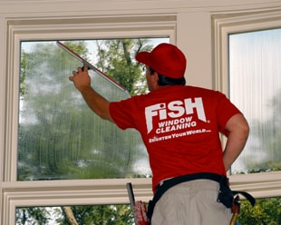 FISH Window Cleaner Using Squeegee to Clean Interior Windows
