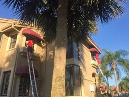 Fish Window Cleaning Fort Myers Cleaning Apartment Building Windows